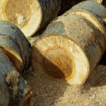 Gartenmöbel Holzarten